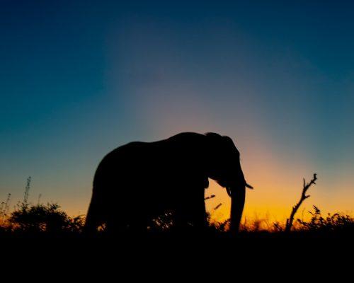 elephantpexel
